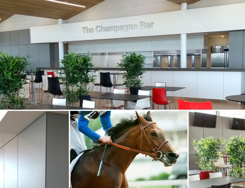 Champagne 'Lined-Up' to Pop at Galway Races, Platinum Style!